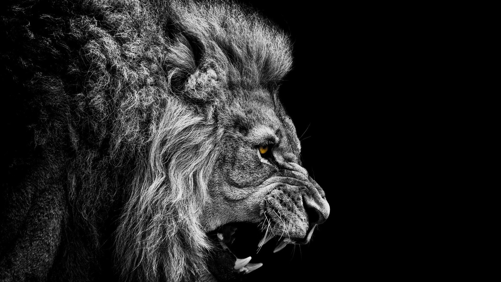 symbolism in the secret lion Secret of the lion (2015) on imdb: plot summary, synopsis, and more.