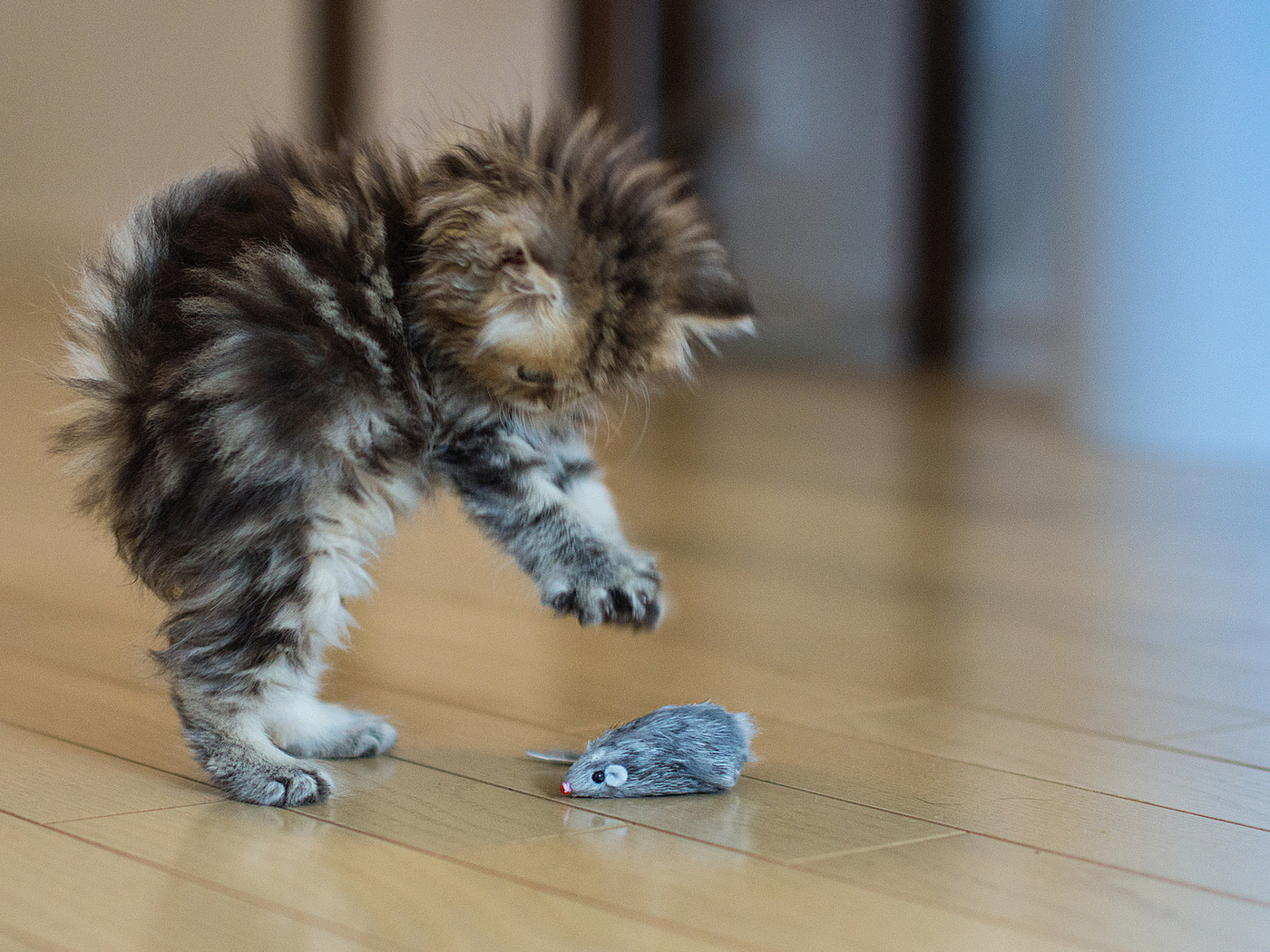 ways to get rid of fleas on cats