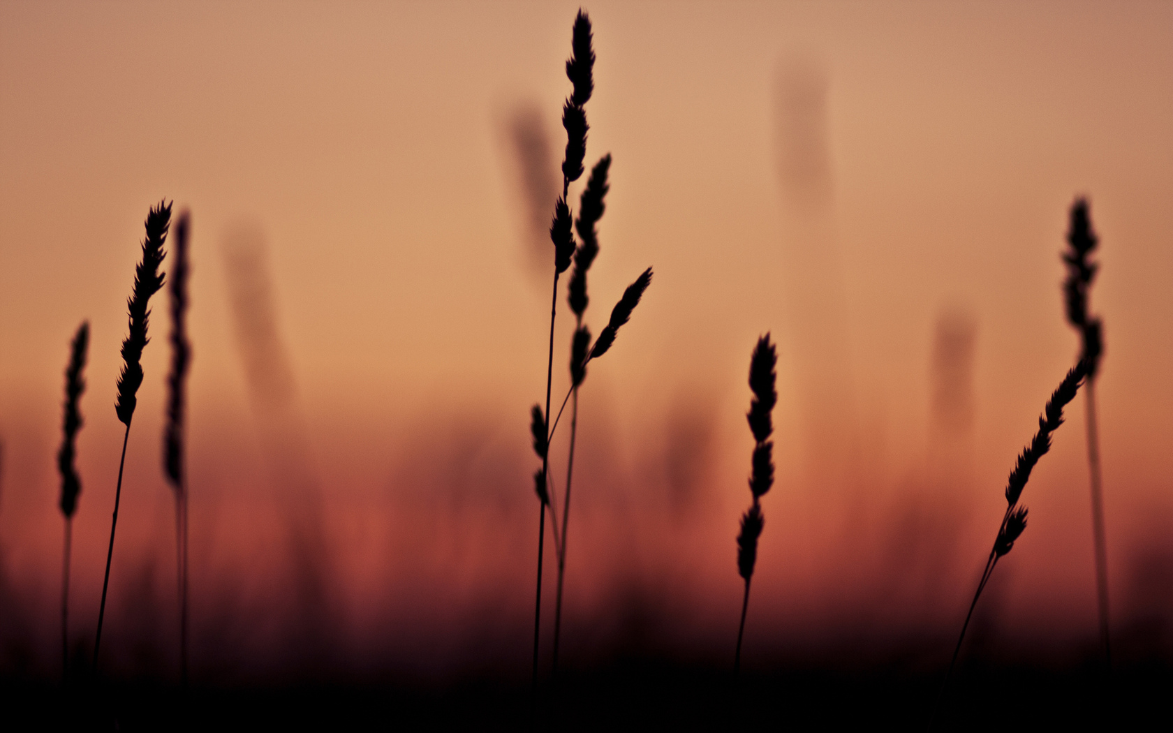 grass, focus, sunset, фокус, macro, 2560x1600, макро, трава, shadow, тень, закат