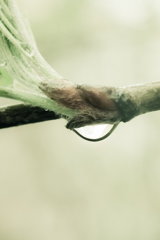 nature, макро, капля воды, macro, 2560x1600, branch, природа, росток, water drop, sprout, ветка