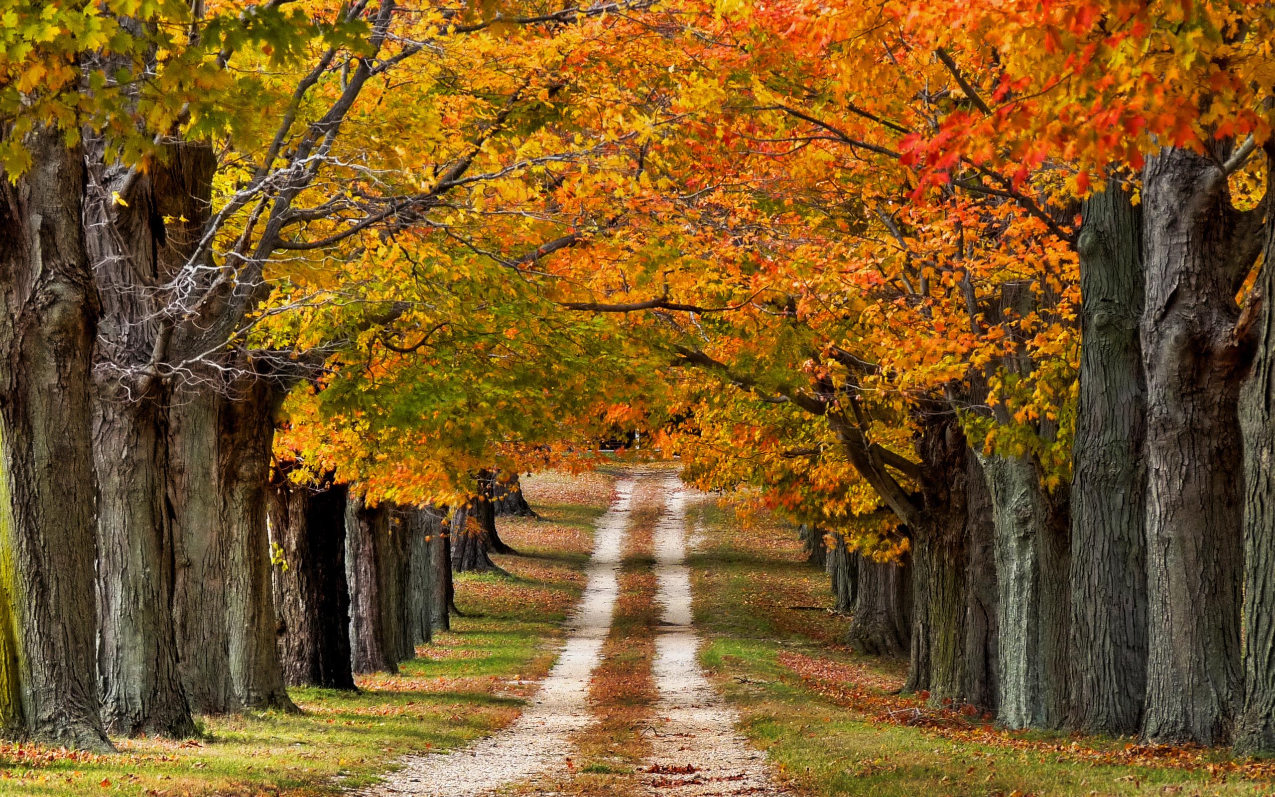 Осень пришла картинки