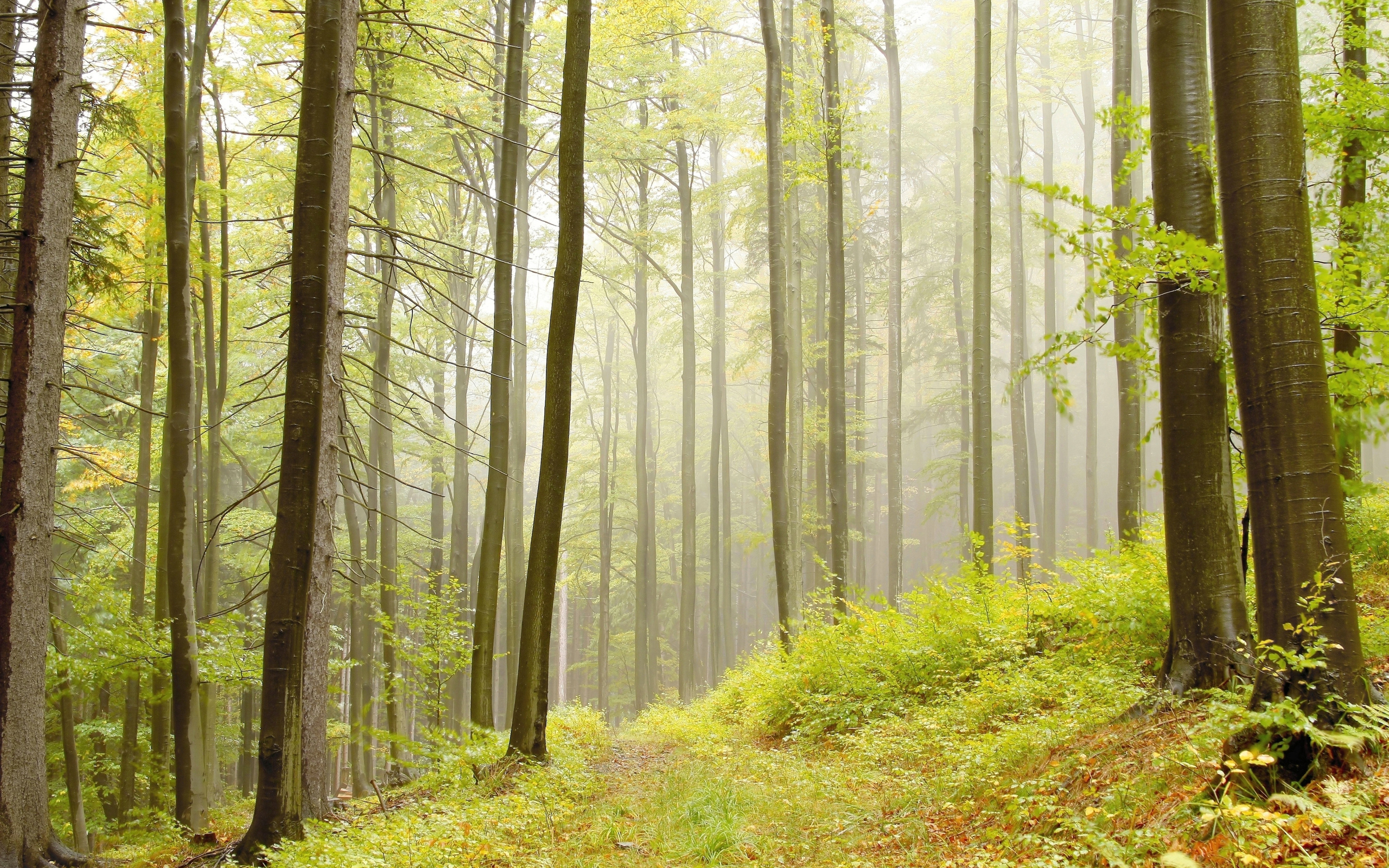 lo rewilding trees forests - HD2560×1600