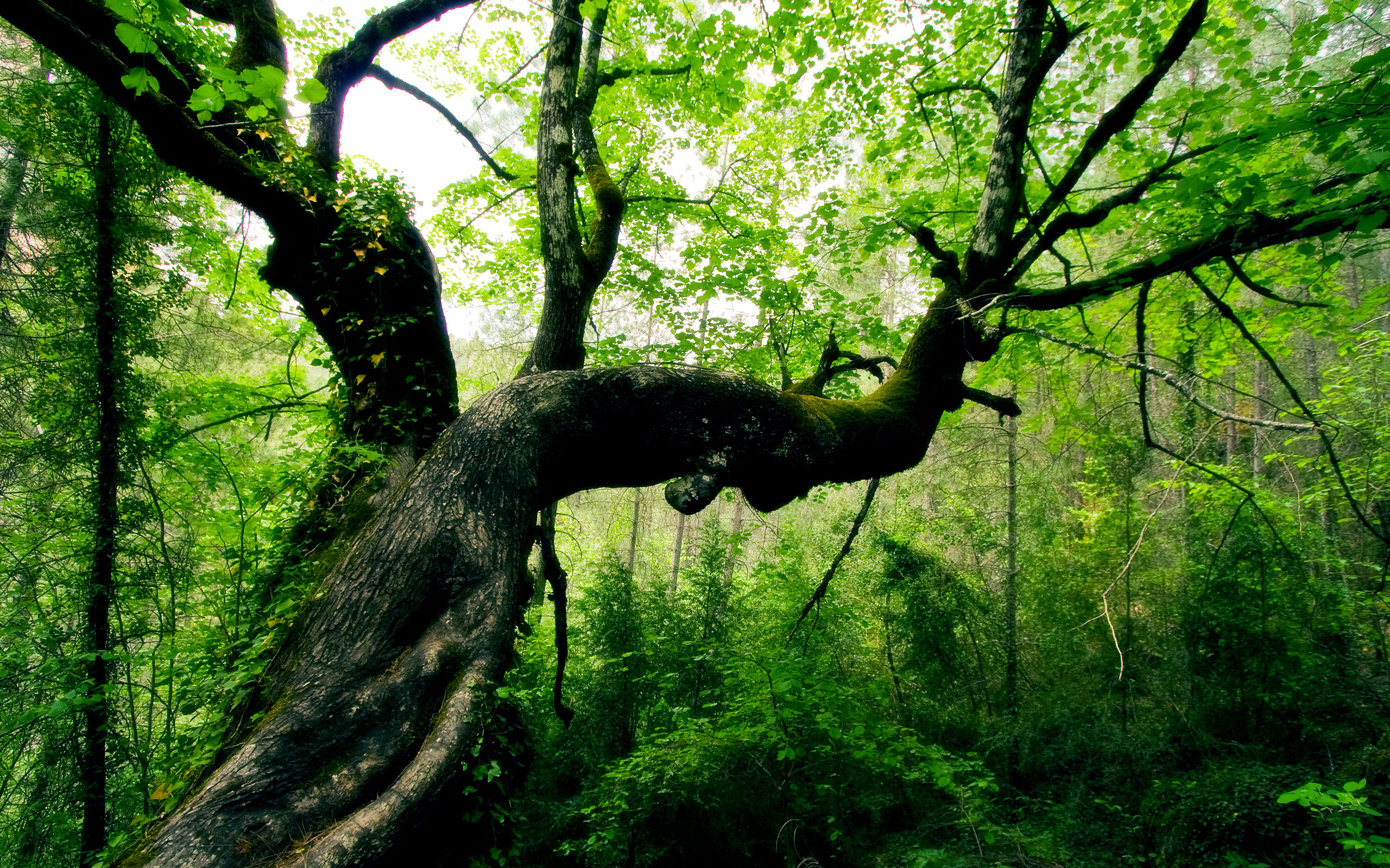 lo rewilding trees forests - HD1200×900