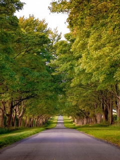 norfolk, kings avenue, англия, sandringham, норфолк, england, аллея