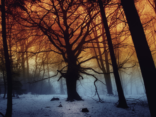 dark, snow, fog, trees, forest