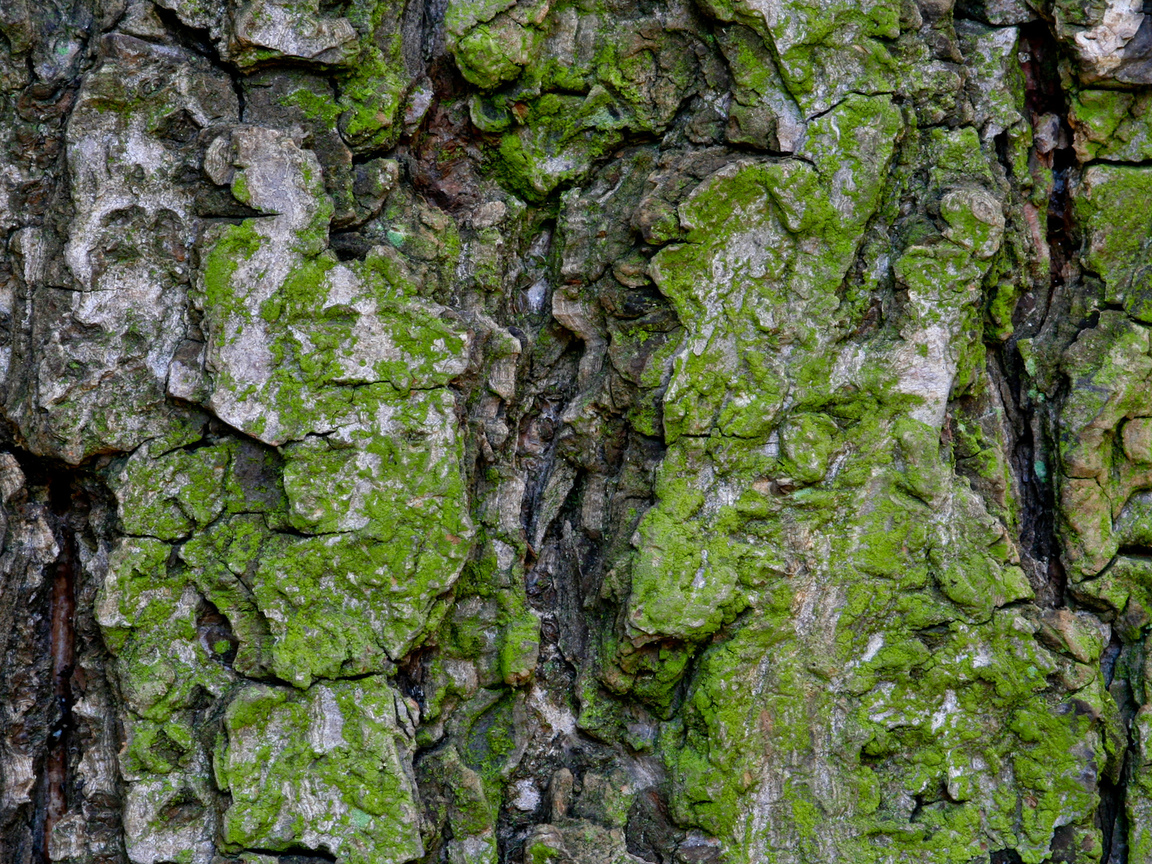 bark, moss, pattern, green