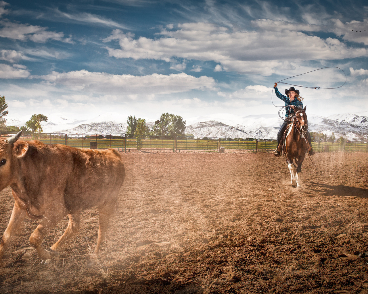farm, rodeo, horse, cowgirl, ropping cattle