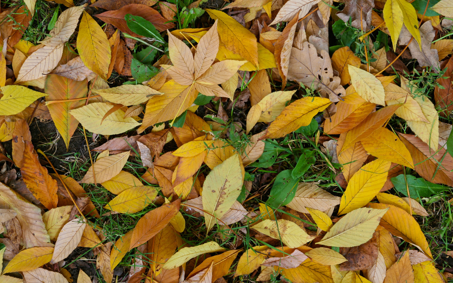 leaf, autumn, green, yellow