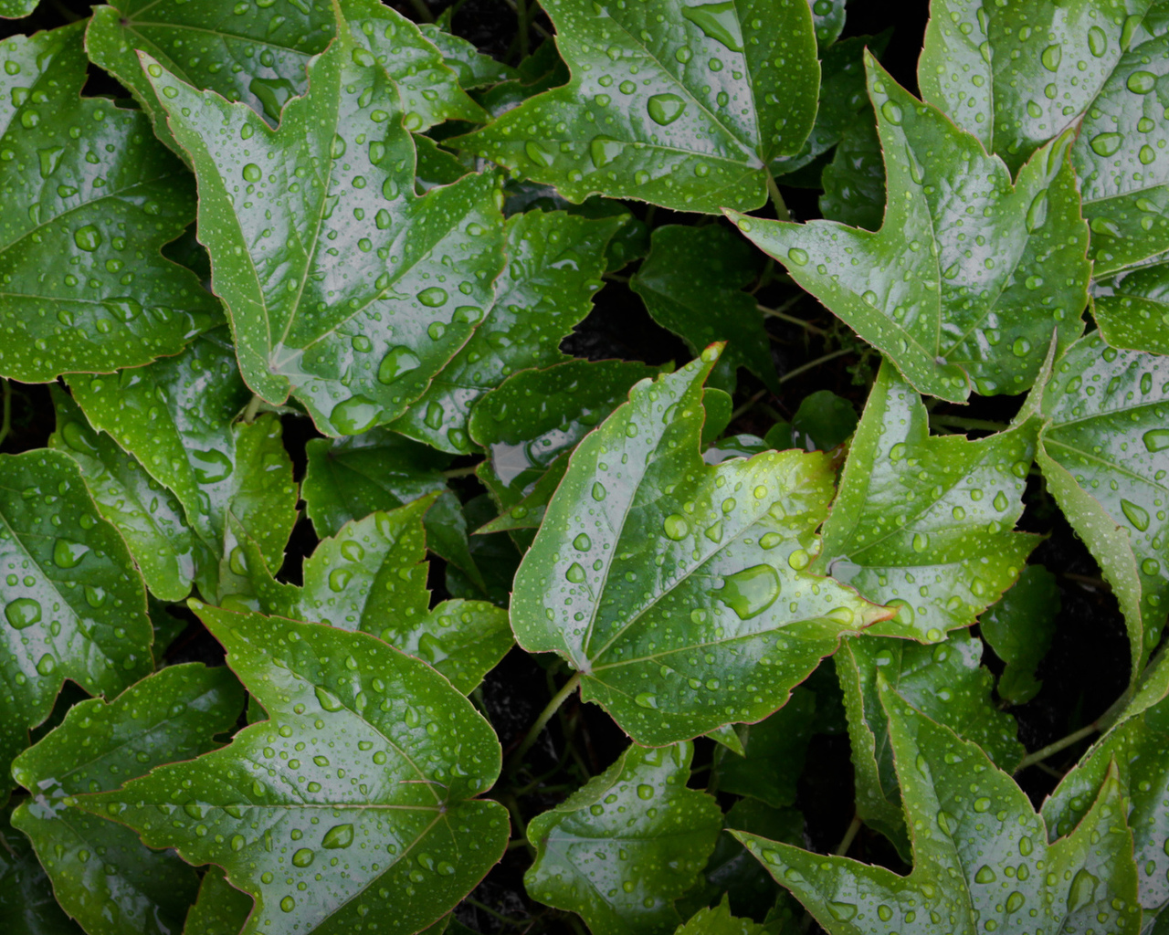 leaves, wet, green, water, yellow, green, pattern