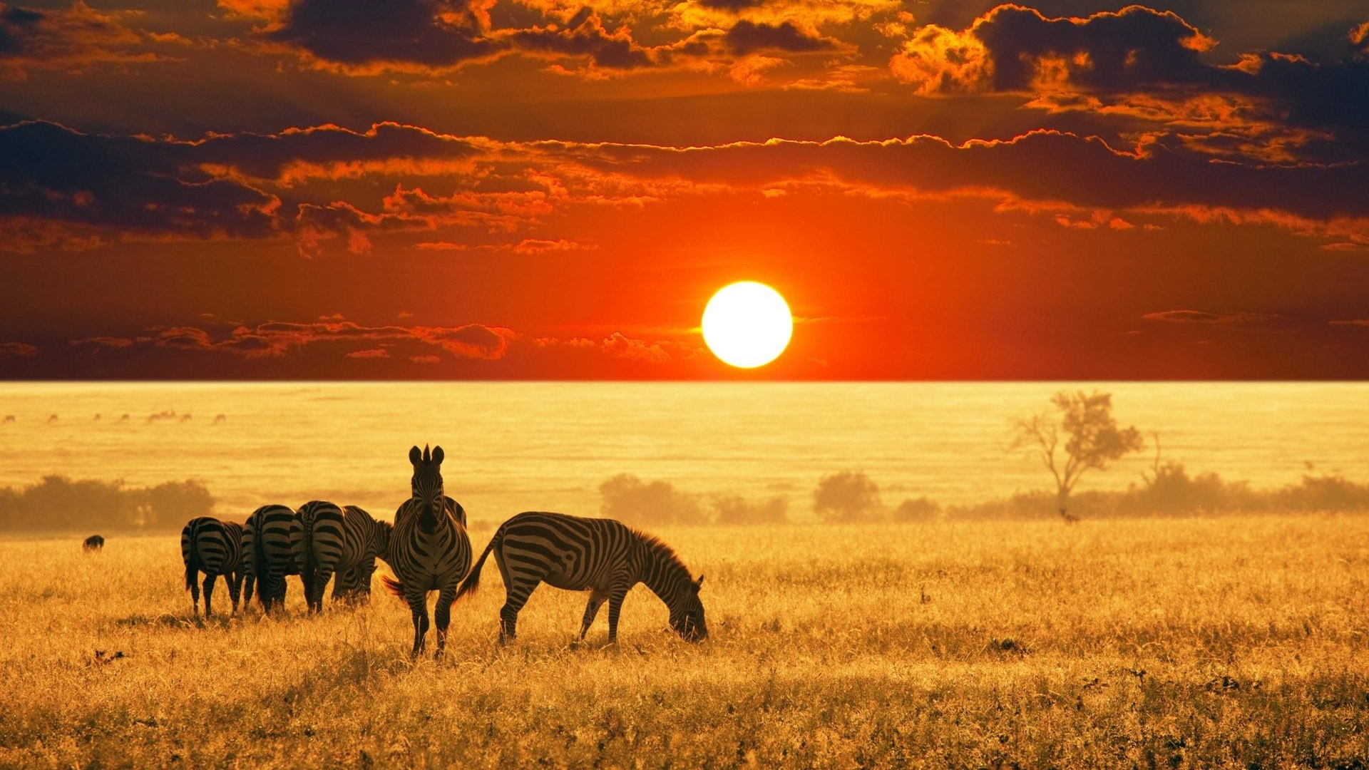 a book report on james shreeves sunset on the savanna