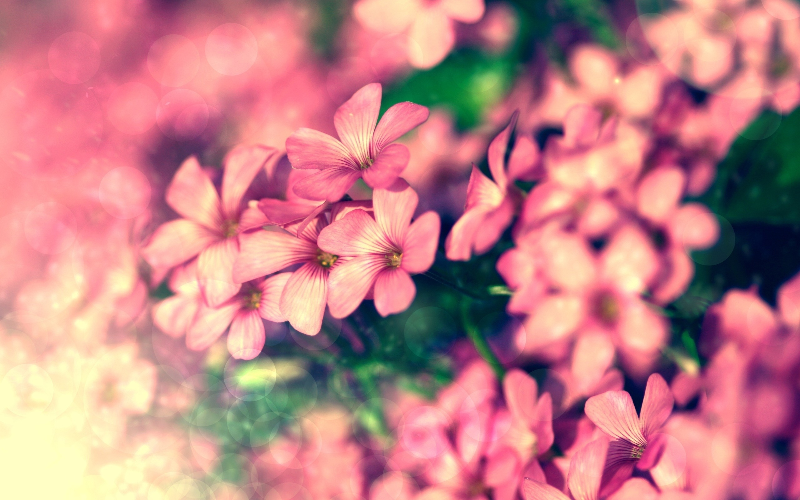 Красивые цветы обработанные