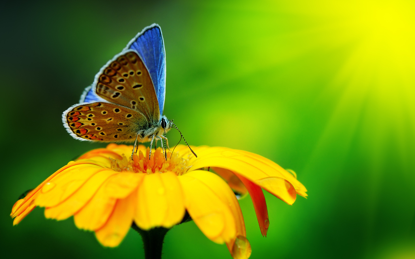 Beautiful green butterfly pictures