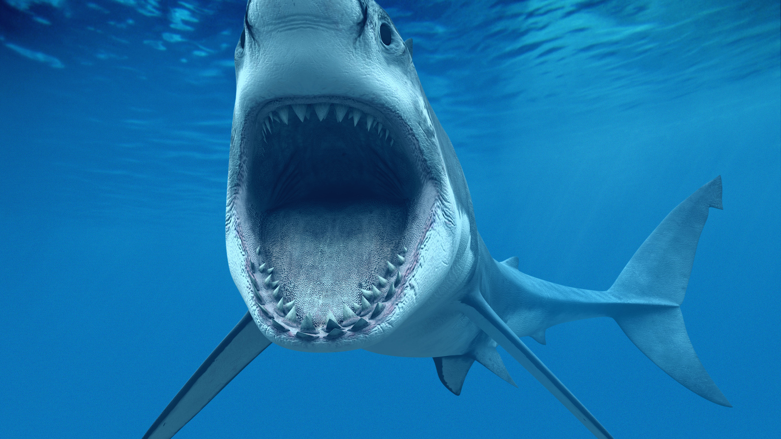 How Big is a Great White Shark  Animals Time